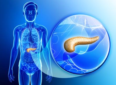 Pancreas Controls Insulin Sensitivity